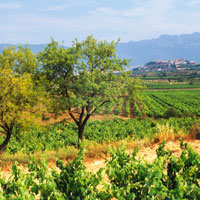 With its numerous wine producing regions and ideal climate, Spain is asserting itself as a major player amongst European vineyards