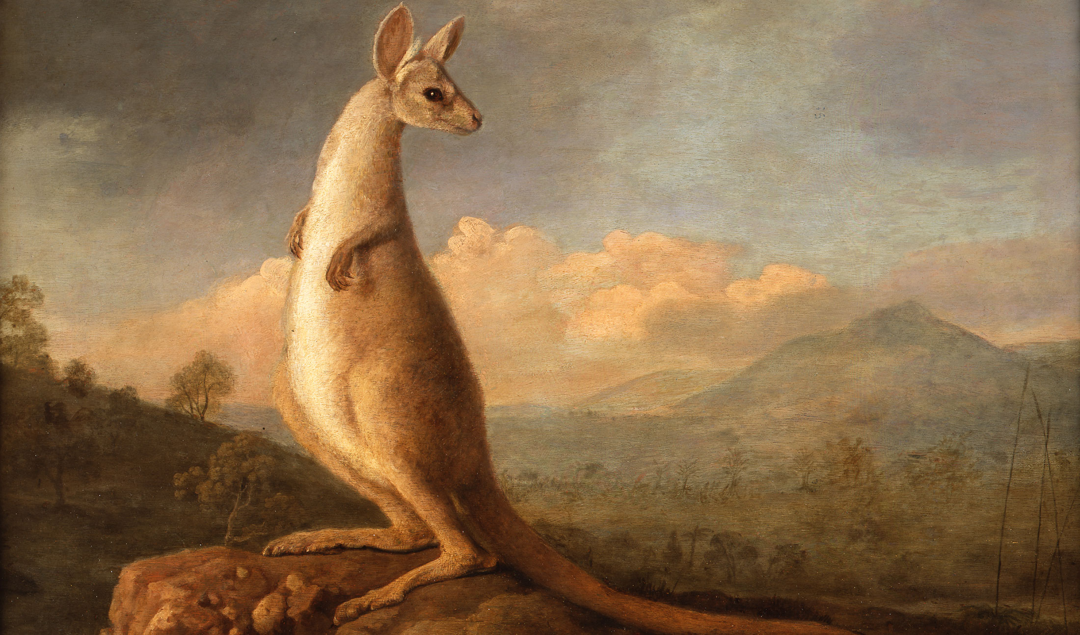 The Kongouro from New Holland by George Stubbs. Stubbs, a self-taught expert in animal anatomy, was able to paint the kangaroo from a skin he managed to inflate to life-like size. Courtesy of Nevill Keating Pictures Ltd