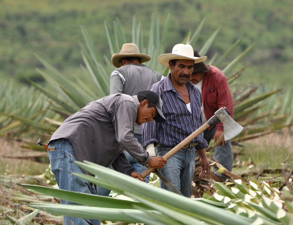 Mezcal is still produced using traditional methods on small distilleries. Image © Anna Bruce