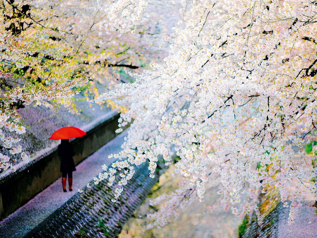 Blossom in Nagoya