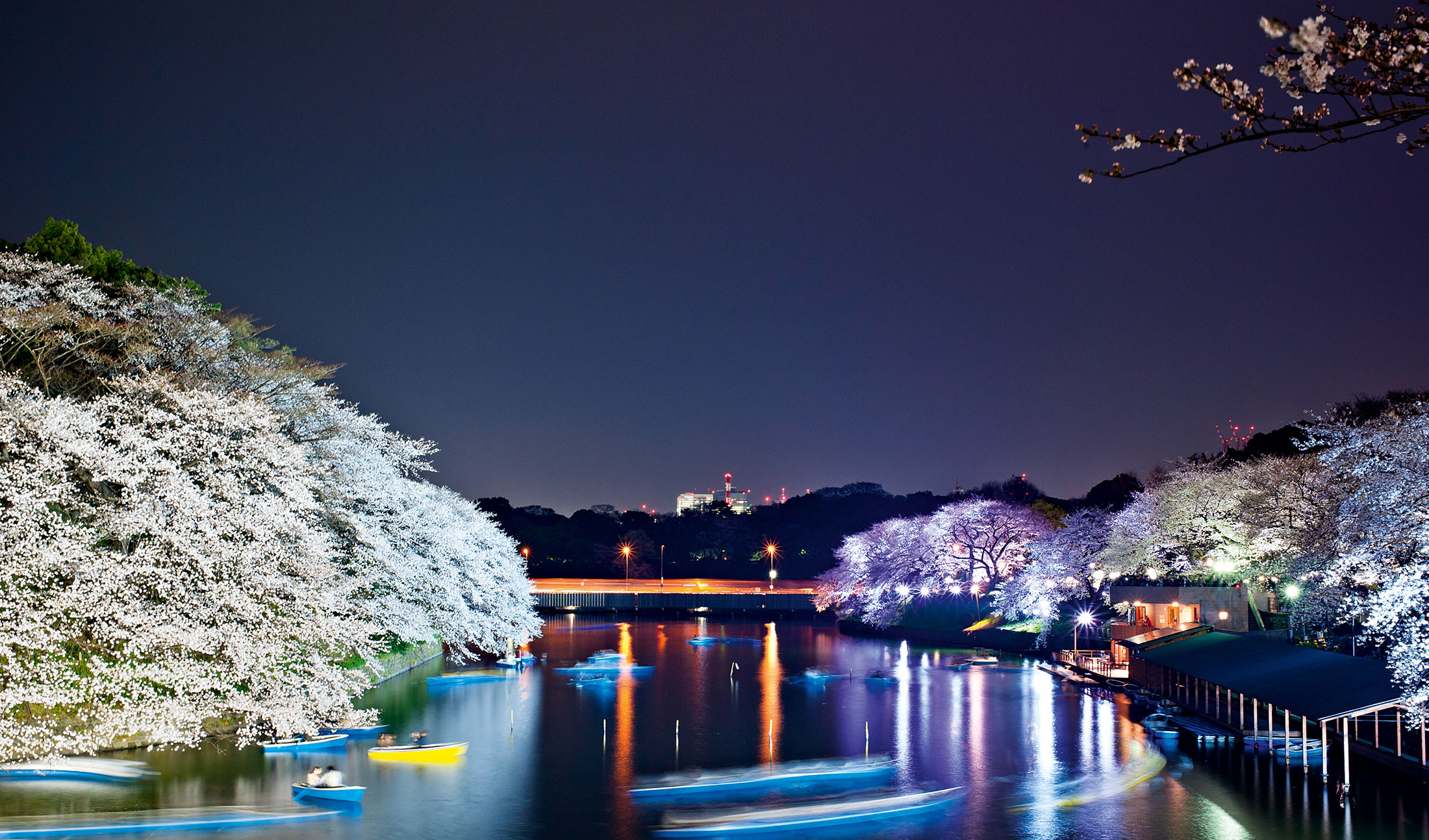 Japan's cherry blossom season is a time-honoured tradition that is celebrated across the length and breadth of the country. This integral part of Japanese culture brings a flood of new visitors each year, and with it, a sizable boost to the country's economy