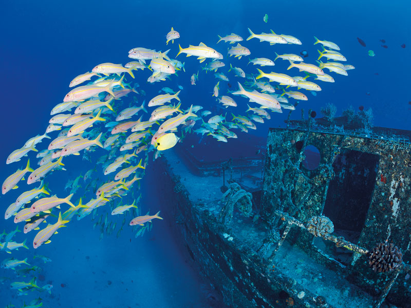 Underwater tour companies are springing up to offer tourists a glimpse at famous shipwrecks and undersea sites of interest