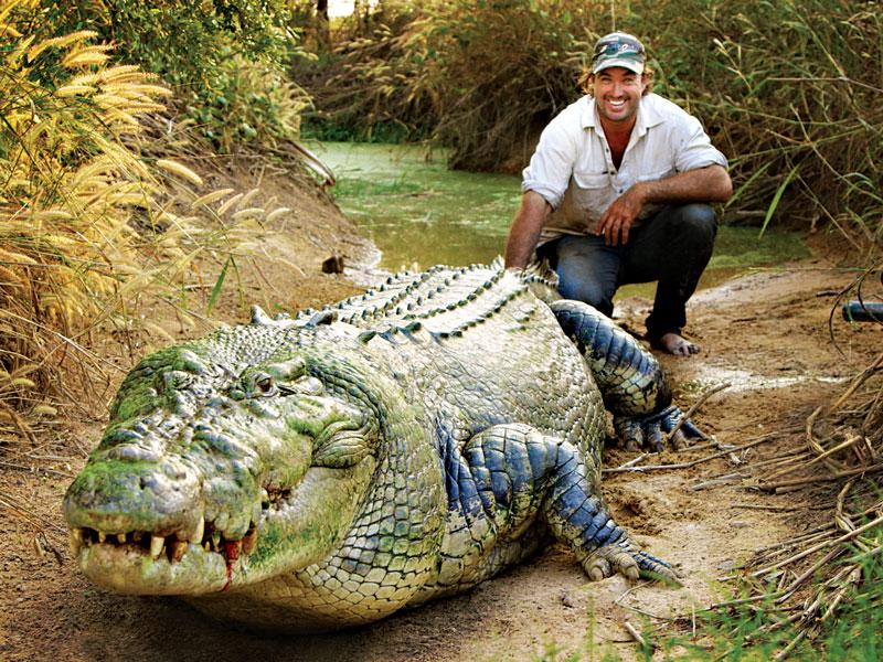 Image result for Crocodile adventurer Matt Wright in Australia.