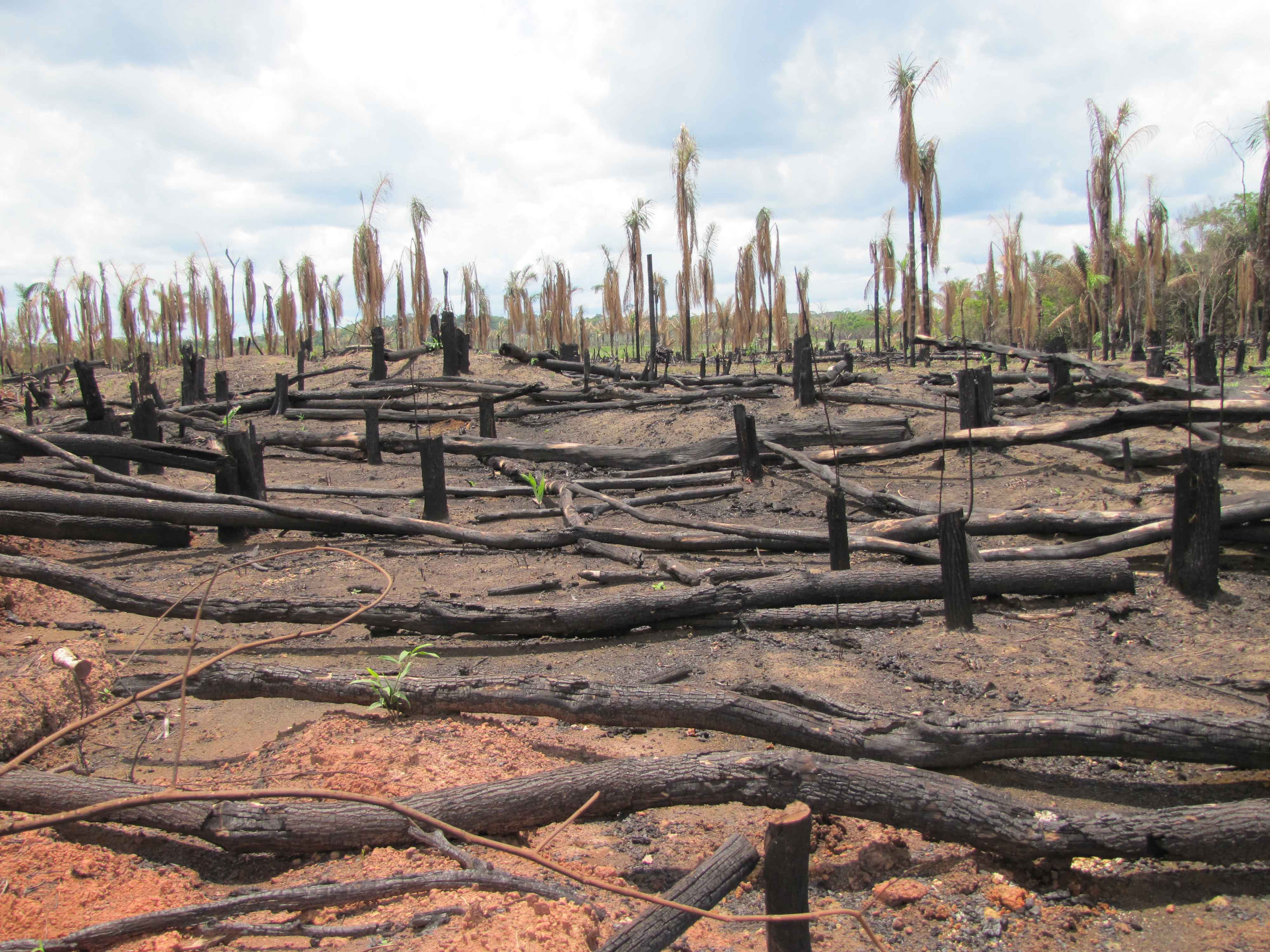 Thesis for research paper on deforestation in rainforest